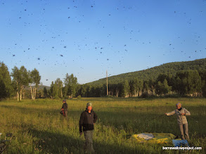 Photo: Setting up camp: Those aren't birds, they're insects