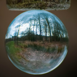 Round nature by Paula NoGuerra - Artistic Objects Glass ( nature, lensball, crystalball, details, trees, upsidedown )