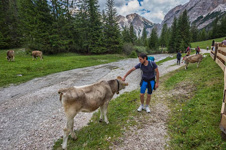 Photo: Daniele checking out Cow in Malga Foresta on Trail 19 in Valle di Braies, Dolomiti, Italy | http://blog.kait.us/2014/06/hiking-dolomites.html