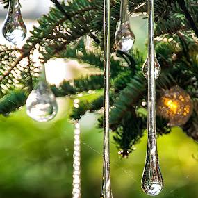 Teardrops by Carol Ward - Artistic Objects Glass ( teardrops, christmas decorations, christmas, longwood gardens, glass ornaments,  )