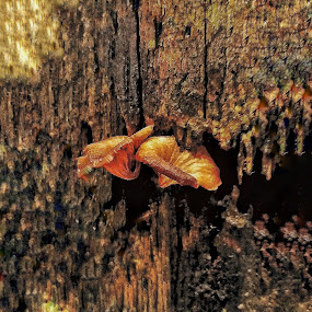Fungi by Erl de Jose - Nature Up Close Mushrooms & Fungi ( mushroom, fungi, nature, nature up close, garden )