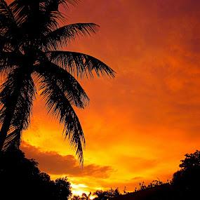 Sunset madness by Ariniwinda Hapsari - Landscapes Sunsets & Sunrises ( clouds, sky, sunrises, nature, coconut, silhouette, sunset, siluet, sun, fire )