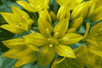 Photo: yellow 1