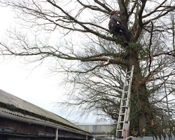 paul jackson climbing a tree in devon