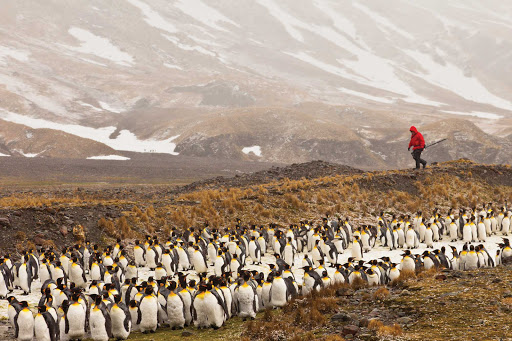 A traveler hikes Fortuna Bay, South Georgia, amid a colony of penguins.