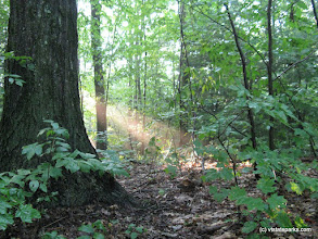 Photo: Sunbeam in the forest at Fort Dummer State Park by Debbie Thomas