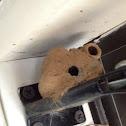 Mud dapper wasp nest