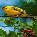 Red Cherries Bird LWP icon