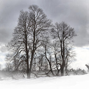 Drifting Snow by Guy Longtin - Landscapes Weather ( fence, cold, windy, snow, blistery, rail fence )