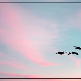 Egyptian Geese by Eugene Dopheide - Digital Art Animals ( africa )