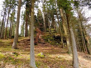 Photo: a little uphill  #fotoamateur // +Fotoamateurby +Britta Rogge+Karsten Meyer+Scotti van Palm+Markus Landsmann+Remo Primatesta #hqspnaturalother +HQSP Natural Othercurated by +Valesa Diamontes, +Delcour Eric and +Sean McLean #Franken  #trees  #forest