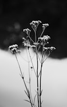 Photo: goodnight , I hope you are all having a lovely evening :)  #flowerphotography  #monochrome  #bwphotography  #blackandwhitephotography  #nikon