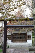 Photo: 北竜町の景色・皐月の3