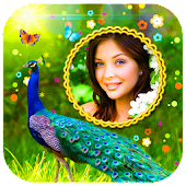 Peacock Photo Frames HD