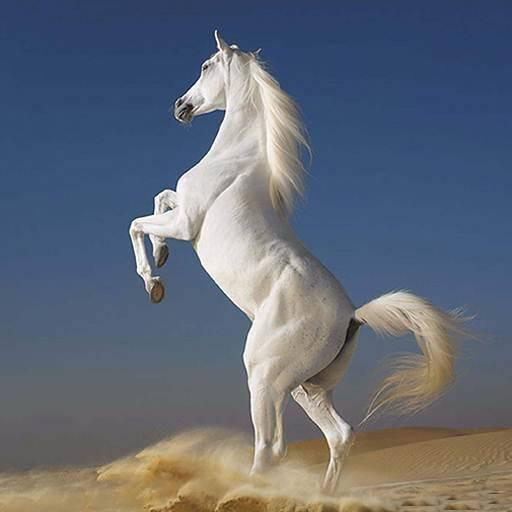 White Horse Hd Wallpapers - Apl di Google Play