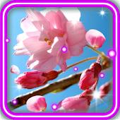 Sakura Blossoms HD LWP