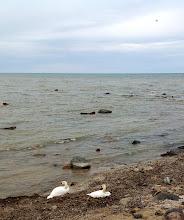 Photo: Birds along the Lake Huron shoreline