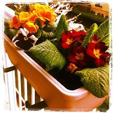 Photo: Balcony flowers #gplus - via Instagram, http://instagr.am/p/Ju8TAapfrr/