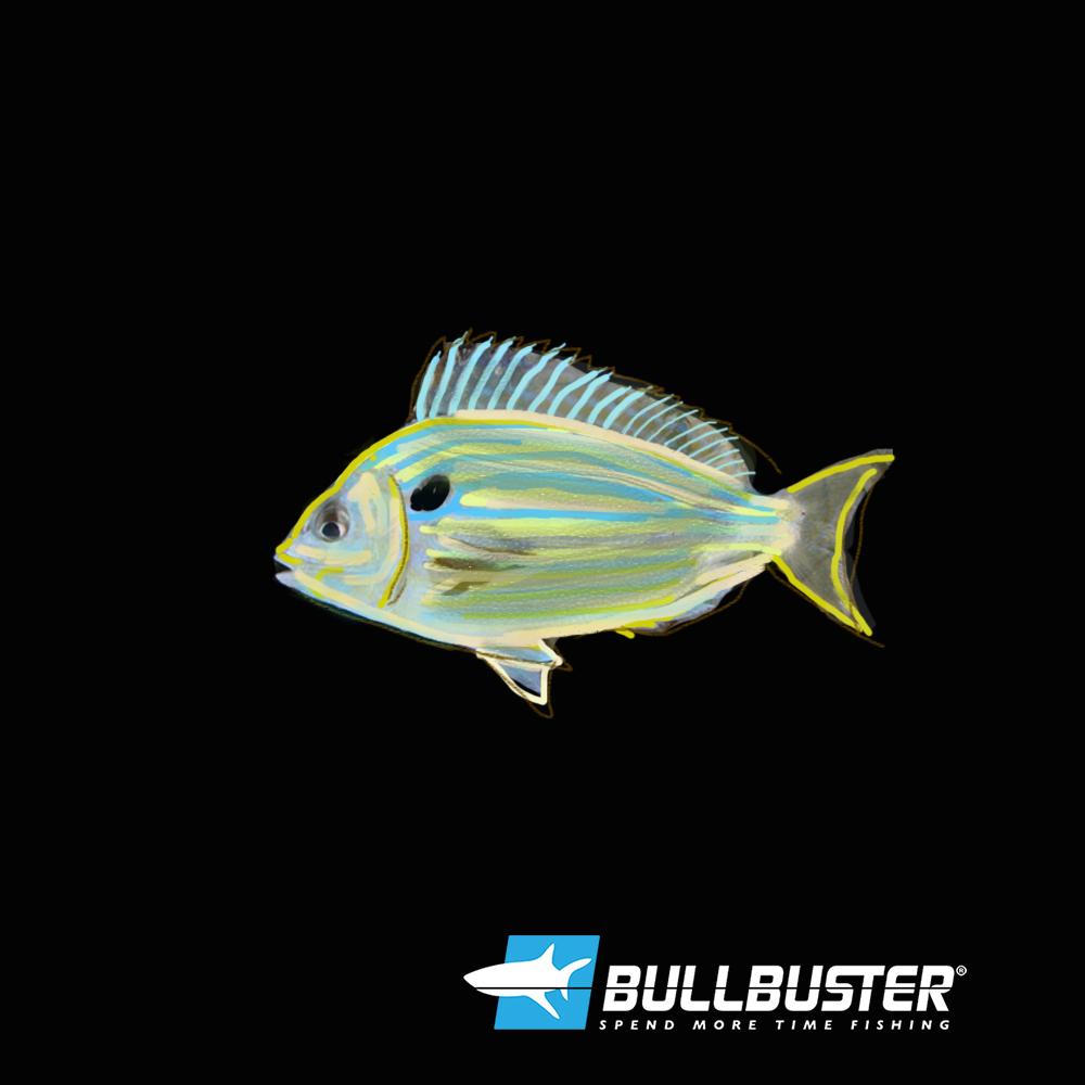 Pinfish For Bait