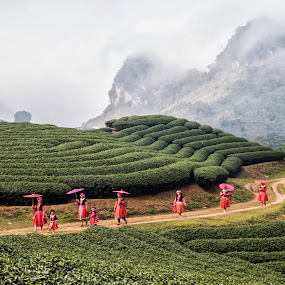 Ethnie Mong in Nam Kha - Moc Chau - Son La Province - Vietnam by Andre Minoretti - Landscapes Mountains & Hills