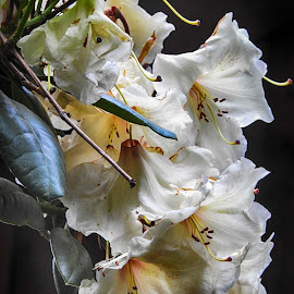 by Brenda Baird - Flowers Flower Gardens