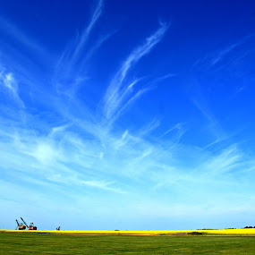Wispy Clouds Over Alberta by Jacob Uriel - Landscapes Cloud Formations ( clouds, field, alberta, canola, blue, wispy )