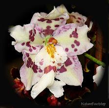 Photo: http://nfmacro.blogspot.se/2010/11/nf-macro-10.html
