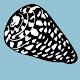 Marine Conus Recognition Download on Windows