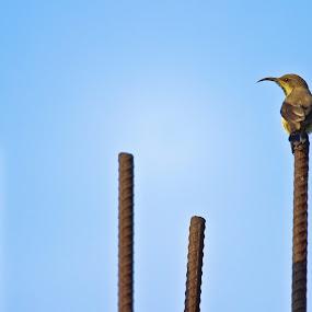 by Mriganka Sekhar Halder - Animals Birds