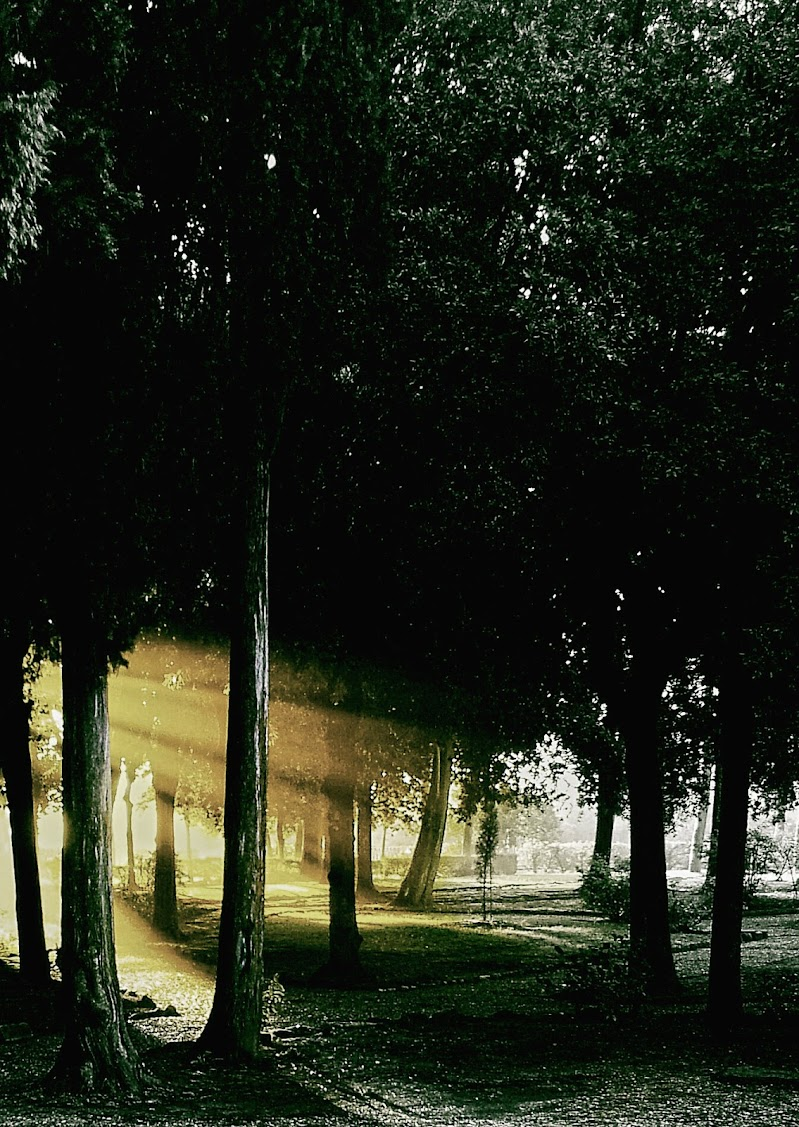 Primi raggi in pineta di StefanoRegi