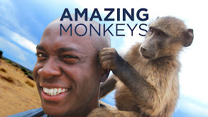 Amazing Monkeys thumbnail
