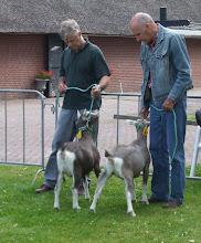 Photo: Rubriek 3: toggenburger lammeren geboren in 2012.  1a. Nellie 64, 2a. Nellie 65.  Beide lammeren zijn van Kees van Dongen.