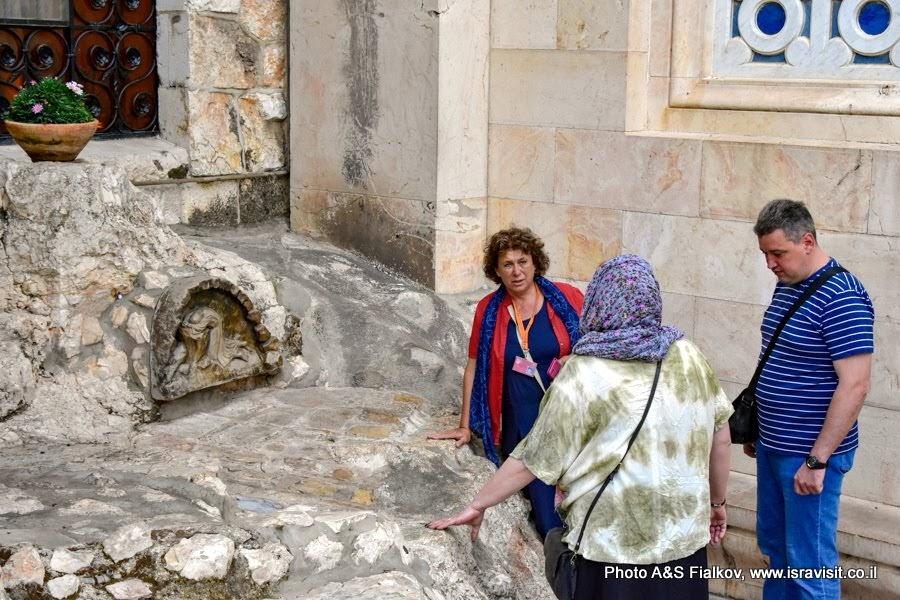 Гефсиманский сад. Камень, на котором молился Иисус Христос в последнюю ночь перед арестом. Экскурсия в Иерусалиме с гидом Светланой Фиалковой.