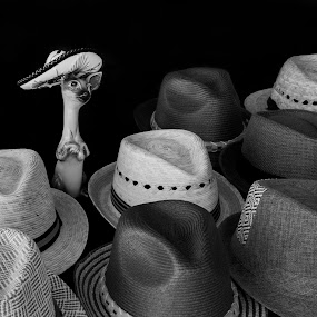 Hats by Tom Reiman - Black & White Objects & Still Life ( many, hats, straw, mexico, b+w )
