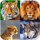 Download Animal Wallpapers HD For PC Windows and Mac