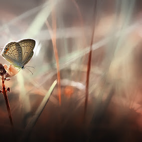 Lonely ...  by Angga Putra - Animals Insects & Spiders ( butterfly )