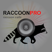 Raccoon Calls - Raccoon Sounds