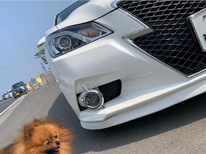 クラウンアスリート AWS211 ハイブリッド アスリートS 4WDのカスタム事例画像 マジックガール♂さんの2020年05月02日19:59の投稿