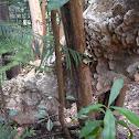 unidentified shelf fungi