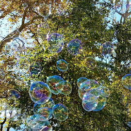 Bolle di sapone tra gli alberi  by Patrizia Emiliani - Nature Up Close Trees & Bushes ( bolle di sapone, alberi,  )