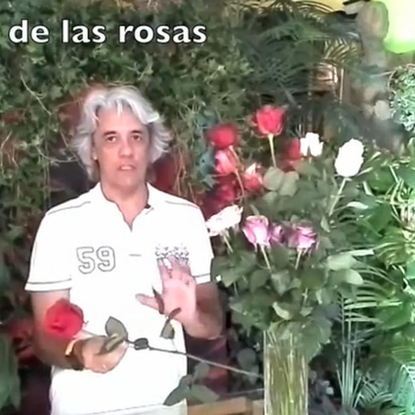 Cuidado de las flores que te regalan: rosas de San Valentín