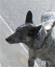 Photo: Gretchen the Dog