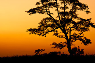 Photo: I took this from the back of an elephant in Kaziranga National Park just after the sun had disappeared over the horizon. Elephant safari is a great way to explore the park. Other animals such as deer and rhino are much more comfortable with the presence of an elephant than a jeep and so it's possible to get much closer to them. It's also a very peaceful way to enjoy the scenery.