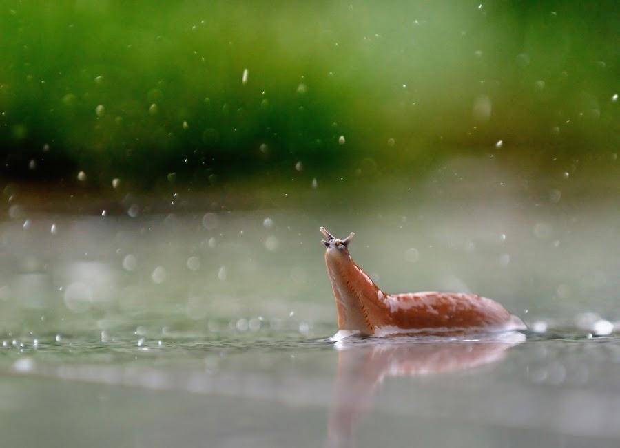 by Christian Wakolbinger - Animals Other