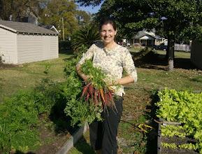 Photo: Carrot harvest, 12/4/10