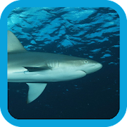 App Icon for eGuide to Sharks and Rays App in Czech Republic Google Play Store