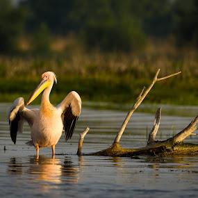 by Adrian Mitu - Animals Birds