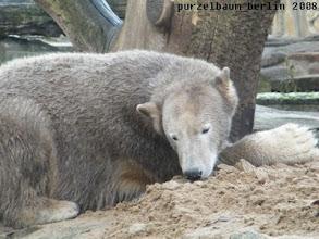 Photo: Ein schoener lockerer Sandhaufen und er riecht so gut :-)