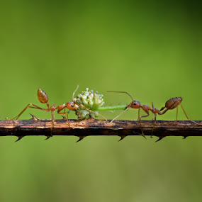 Rebutan by Yudhi Hendra - Animals Insects & Spiders