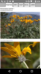 Nevada Wildflowers- screenshot thumbnail